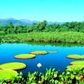 bonito_pantanal