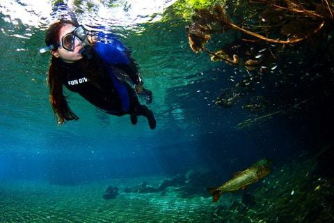 Bonito Diving