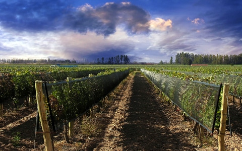 Wine Tour Argentina & Chile