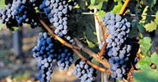 boudeaux-vineyard