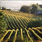 Bordeaux Wine Day Trip